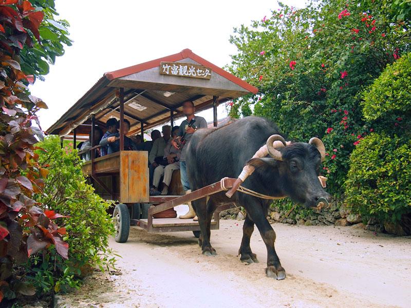 水牛車で島内を観光