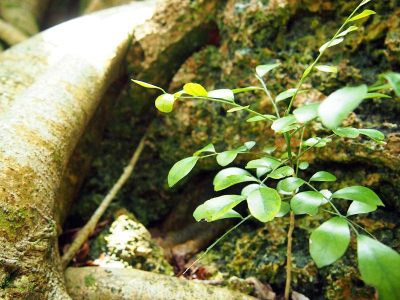 植物の命を感じます