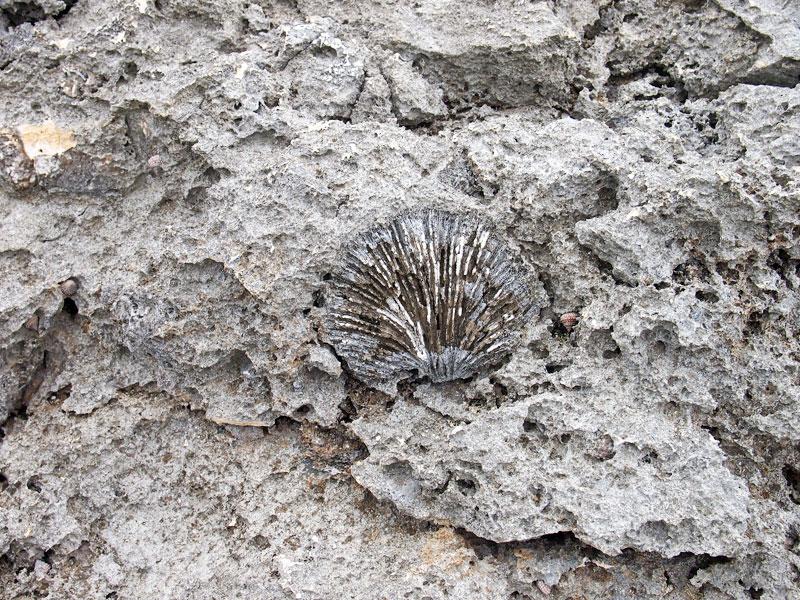 岩場の化石?
