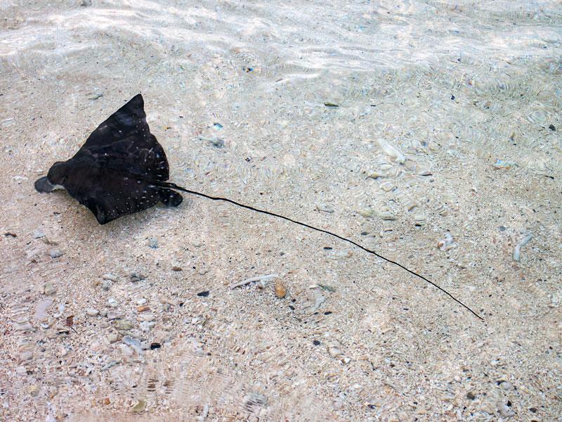 浜辺の珍客