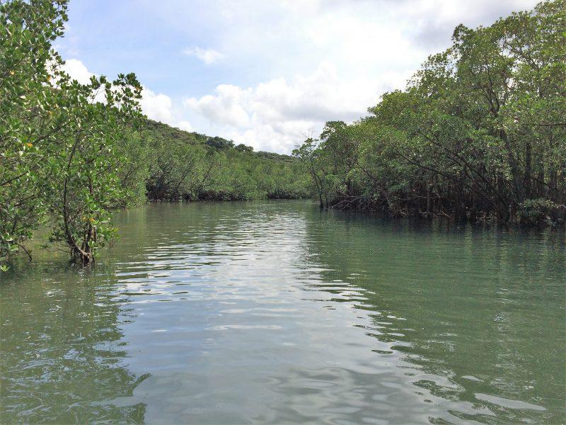 西表島マングローブ林の観光ツアー